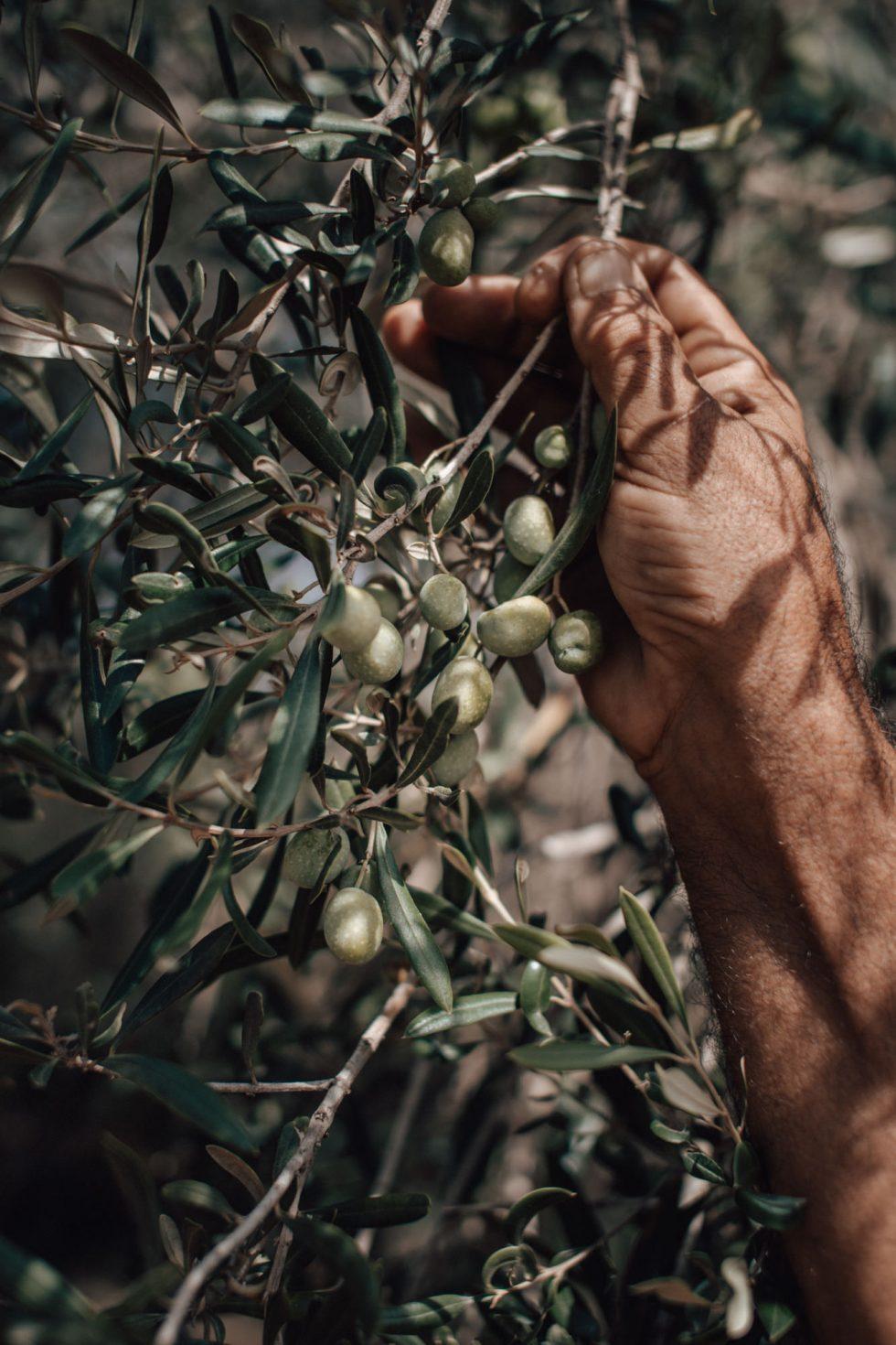 malta-travel-sustainable-farm-lifestyle-photographer-laura-g-diaz-2