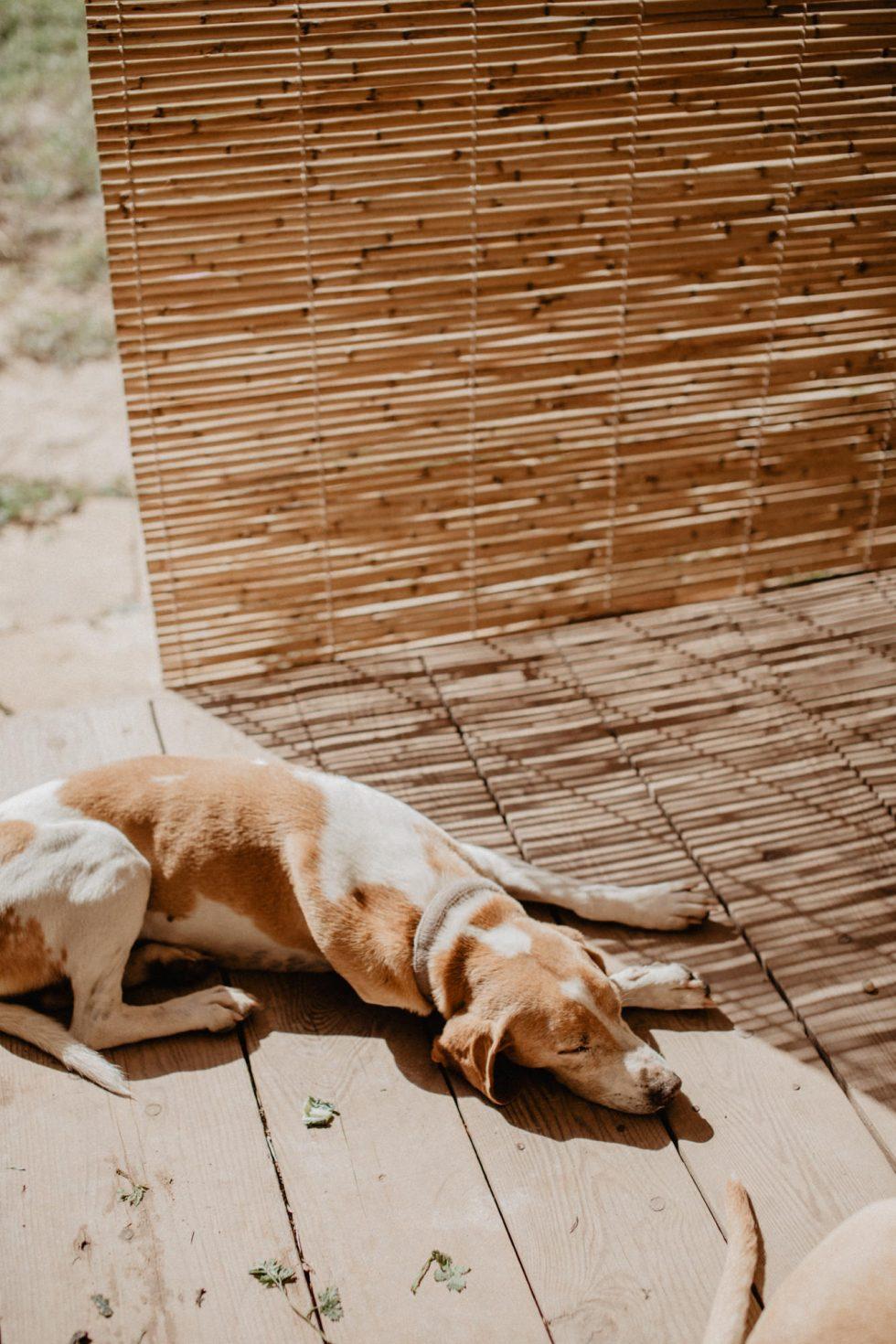 malta-travel-sustainable-farm-lifestyle-photographer-laura-g-diaz-6