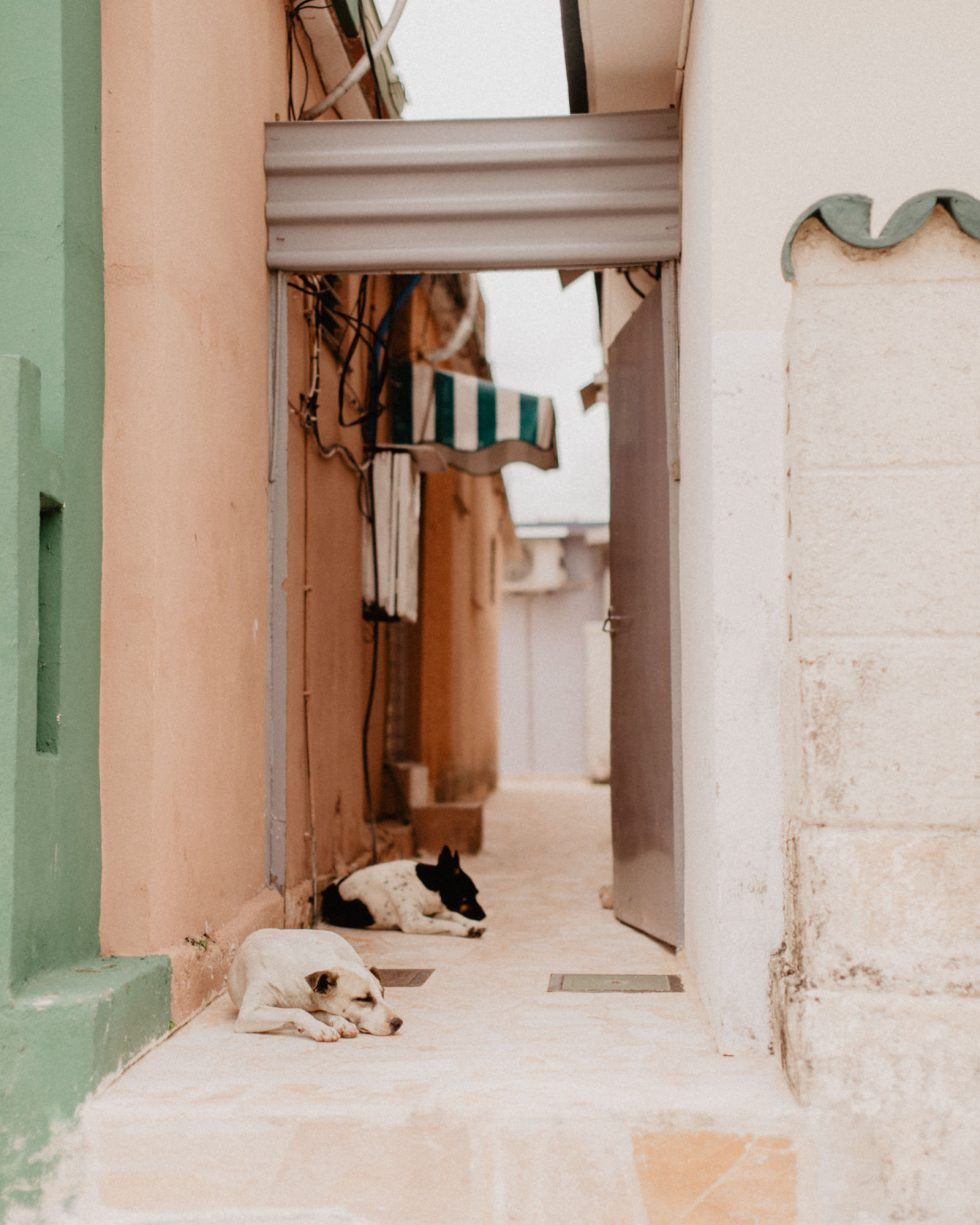 havana-cuba-dogs-travel-lifestyle-photographer-laura-g-diaz